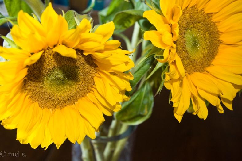 Sacramento Street Sunflowers