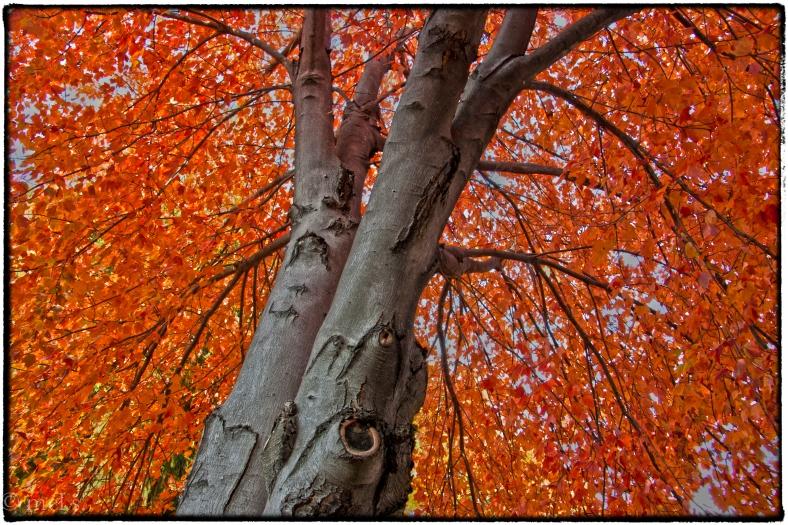 Orange Tree Next Door_2019-Edit