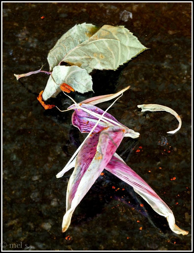 Lilies Dired 2017-02-26 16-51-27 (B,Radius8,Smoothing4)-Edit.jpg